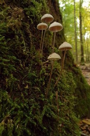 Argonne nature.