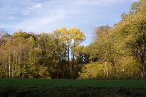 Argonne et nature