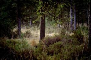 Argonne nature