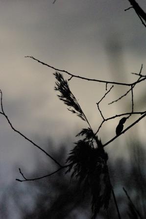 Nature et Argonne