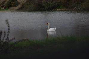 Décembre nature en Argonne