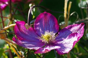 De nature et de fleurs