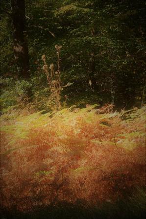Couleurs d'automne...En cours !
