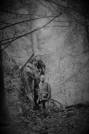 automne et forêt