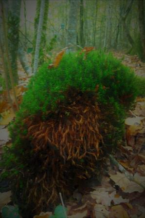 De champignons et de nature