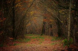 Forêt, nature et autres.