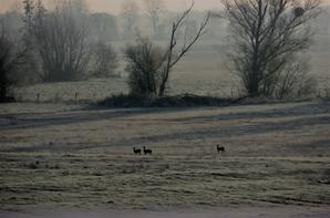 Tofs d'avant la neige 2