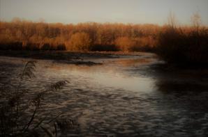 Tofs autour des étangs