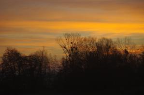 le ver de soleil en Argonne.