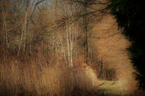 Ambiance forestière sous les vols de grues cendrées.