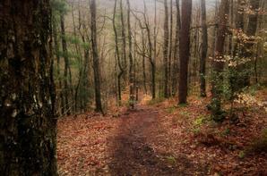 Nature et forêt en Argonne.