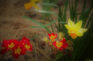 Partage de couleurs, de fleurs du jour.