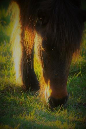 Coucher de soleil sur chevaux
