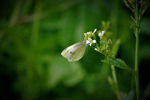 Papillon et autres
