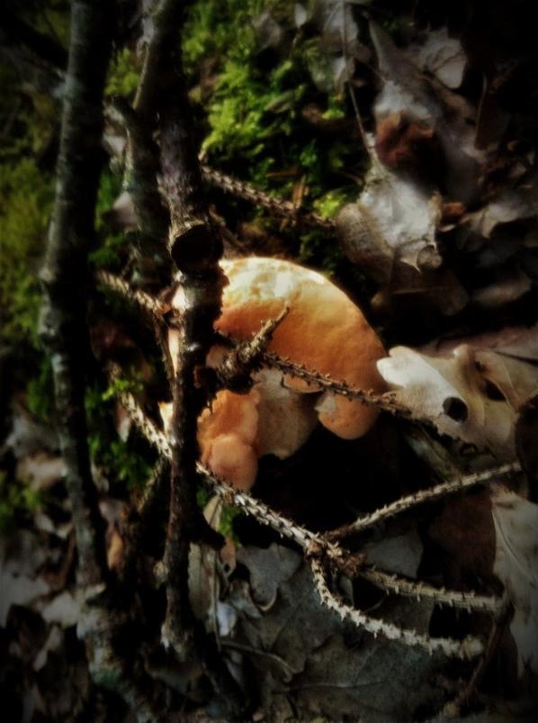 Entre champignons et fleurs