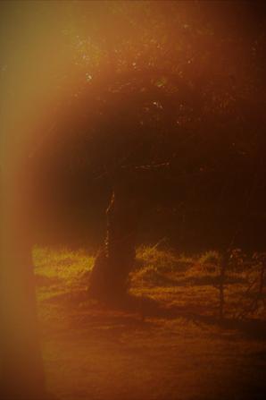 forêt et Dune