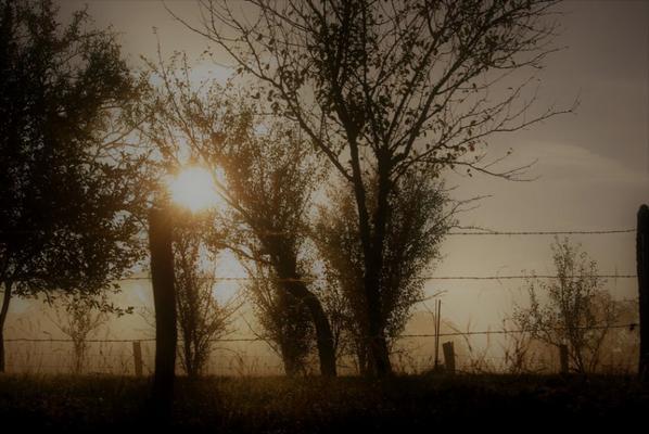 Forêt du jour