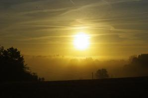 Soleil du matin et champignons