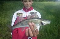 pêche sandre