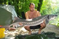 session etang marco 15 departs 6 poisson amours blanc 8.5kg et 11 kg 1 carpe de 8 kg et troi esturgeons de 23 kg ; 20.5kg et 36 kg
