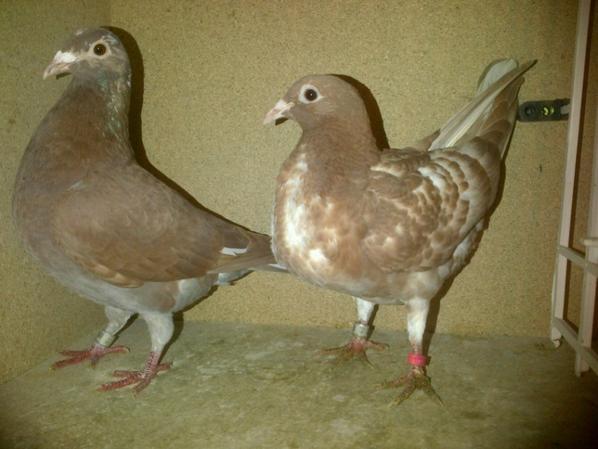 bella-rood et nougatine (cédric tanchon)