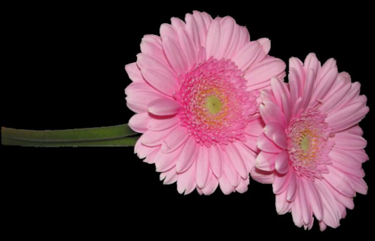 calendrier des fleurs de chaque saison blog de biquette 72. Black Bedroom Furniture Sets. Home Design Ideas