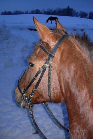 2010# 20 ans sous la neige pour moi... Et 16 pour elle !