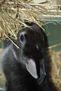 """Petite lapine d'Animalis"" évolue en ""Tiramisu mon amour"""