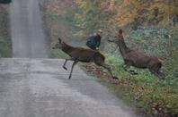 chasse a courre 16-11-2013