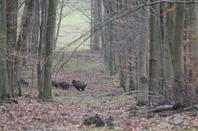 chasse a courre 21-12-2013
