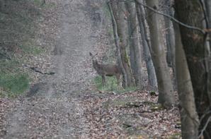 petite promenade du 09-03-2014