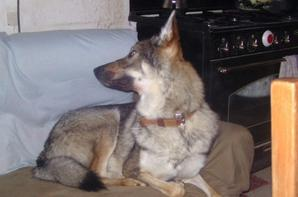 mon petit loup