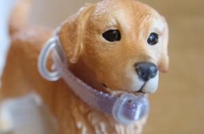 News créas : Collier et laisse pour chien (déesse)