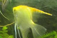 Mes Aquariums 400 Litres , 35 L ; 72 L & 20 L