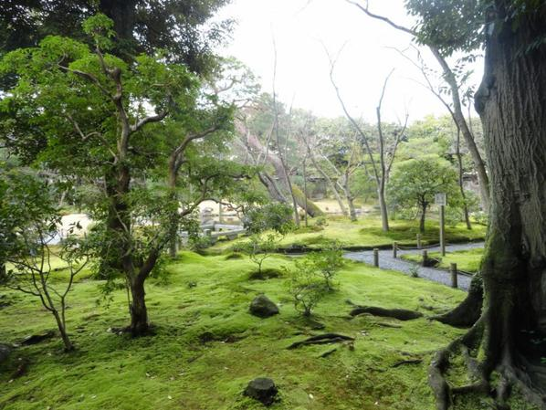 Kyoto le jardin de murin an mon tour du monde for Jardin kyoto
