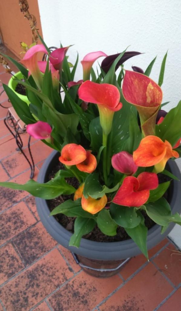 un peu de fleurs