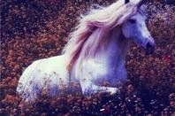 * Pégase ou Licorne *