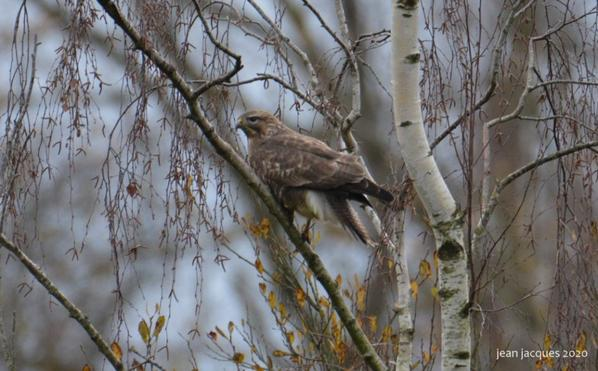 BAUDOUR BUSE VARIABLE