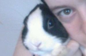 Dessin d'un lapin et d'une partie d'un visage.