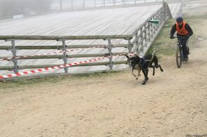 Championnat de france des sport de traineau sur terre 2012