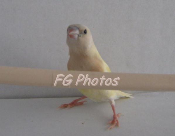 Séance photos après une semaine sortie du nid