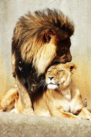 L'amour ...... ♥