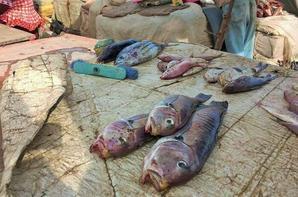 Pêche et visite marché de mbour