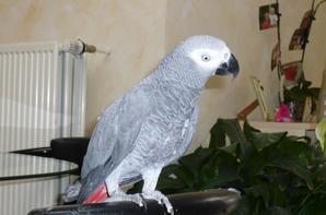 bonjour je m'appelle jean-marie et je suis amateur des oiseaux de puis l'âge de 16 ans