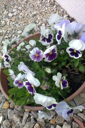 le debut de mes floraisons et plantations