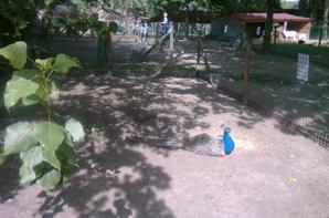 les jolies oies dun parc d'activite fait dimanche avec ma niece cherie et ma louloutte