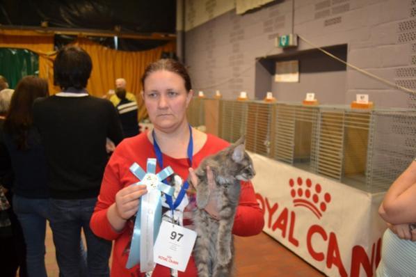 exposition chats a mont-sur-marchienne