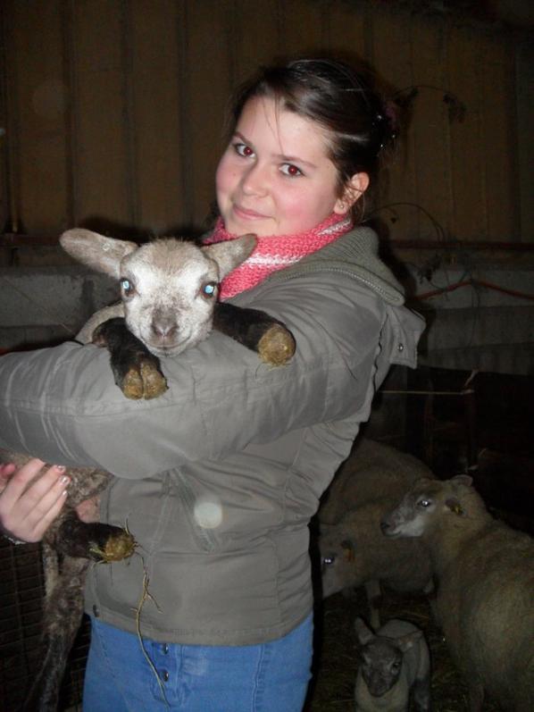 Le temps de l'agnelage commence! L'hiver est là ♥
