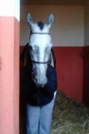 humain ou cheval tel est la question U_U