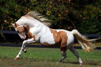 les chevaux que j'aime 2
